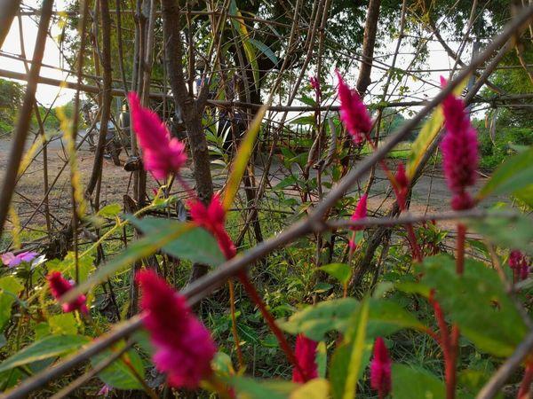 Flower Freshness Petal Red Blooming