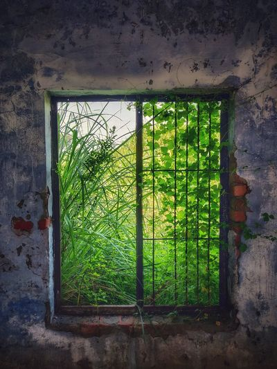 Abandoned building seen through window