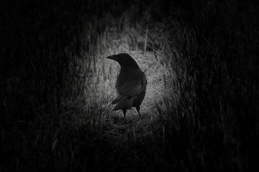 Don't you just hate losing your house keys at night? Tadaa Community | Bw_collection | Blackandwhite | EyeEm Bnw | Monochrome | Night | P510 | Bird With Flashlight