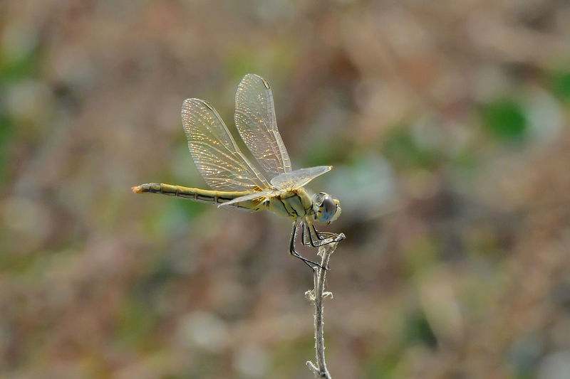 Beauty In Nature Close-up Day Dragonfly💛 Dry Fragility Nature Outdoors Plant Selective Focus Wilted Plant