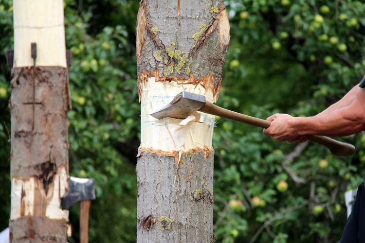 Cropped image of man cutting tree