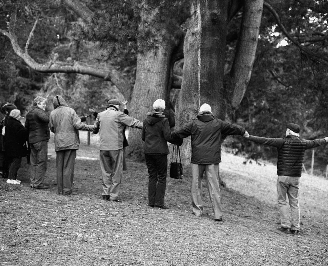 tree, rear view, men, full length, group of people, nature, women, real people, outdoors, standing, day, growth, forest, large group of people, adults only, people, adult, young adult