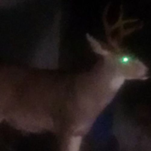 Nice 4x4 buck that lives around my hood.... CityDeer TTownstyle Tacompton Tacomawa 253 PNW UpperLeftUSA WestIsTheBest WestCoastStyle Starboy StarboyStyle CauseImAStar Instagood Instafame Instagrammy