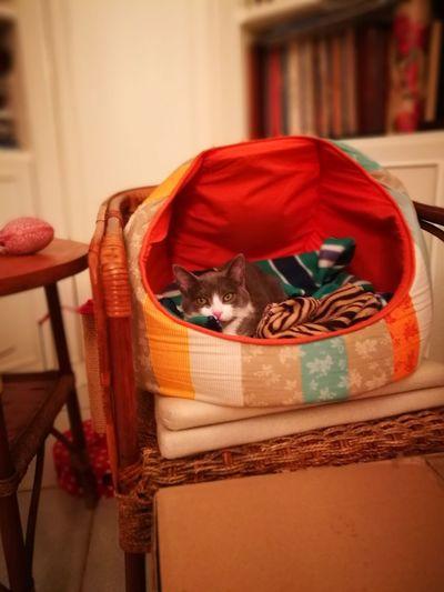 First Eyeem Photo Cat Lovers Cat Cat♡ Lovely Home Animals  Queen Cat
