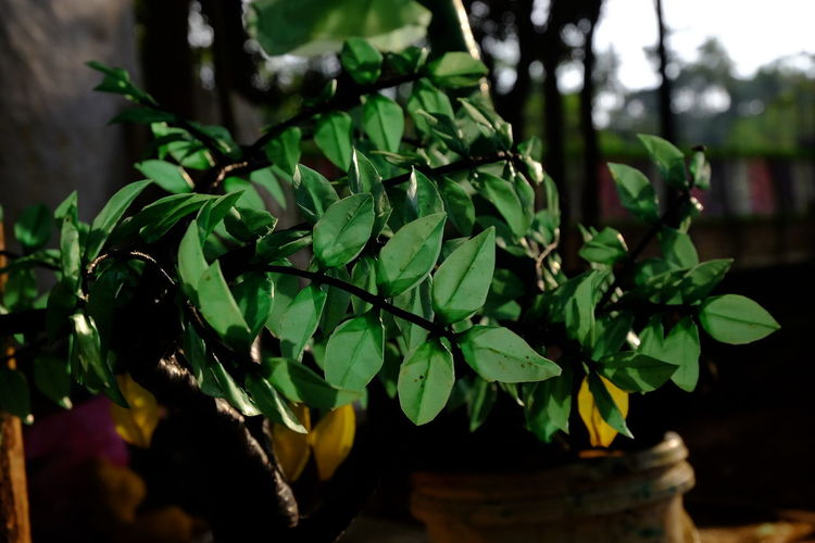 Handmade For You Green Color Close-up Plant Plastic Tree Freshness Nature Day Outdoors Leaf Beauty In Nature