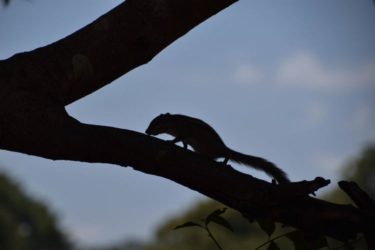 Squirrel in a tree Animal Animal Wildlife Branch Squirrel Tree Silhouette Close-up Sky Woods