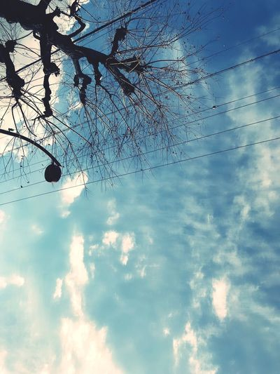 Low Angle View Sky Tree Day Cloud - Sky No People Outdoors Nature Beauty In Nature Growth Branch