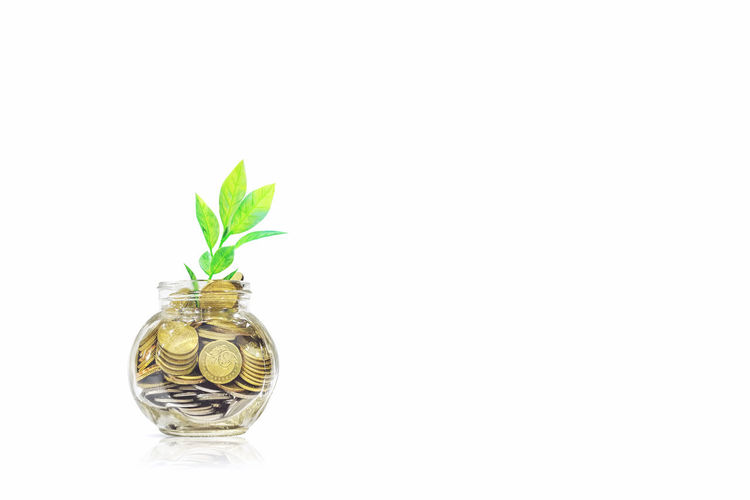 Glass jars with coins and leaf isolated - savings concept Beauty In Nature Business Coin Coins Concept Conceptual Finance Focus On Foreground Green Green Color Growth Idea Ideas Isolated Leaf Malaysia Nature Plant Saving Stem Still Life Studio Shot Syiling White Background