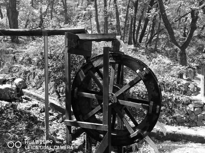 Leica Huawei P9 Seoul Gwanaksan First Eyeem Photo
