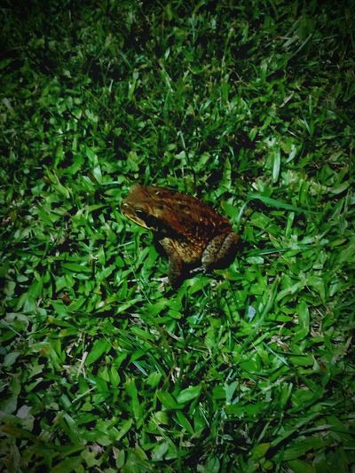 one brave photogenic hopper. EyeEm Selects Nature Photography Naturelovers Nature On Your Doorstep Natute_collection Outdoor Photography Outdoors Nightphotography Night Outside Photography