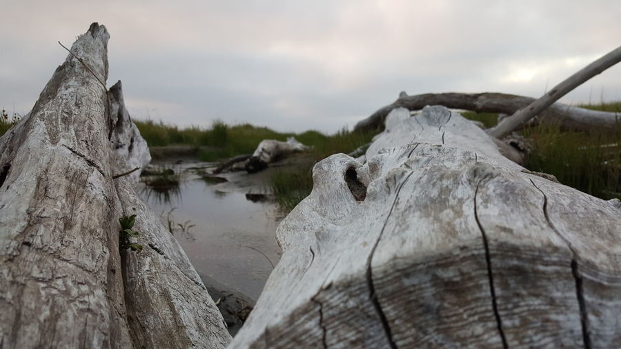 Ocean Shores Washington Landscape No People Outdoors Nature Day driftwood