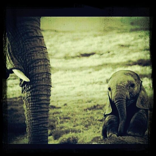 Baby Elephant Favorite Animal Adorably Cute I Wants