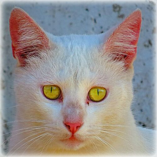 Photo Sin Filtros Hello World:) Cats