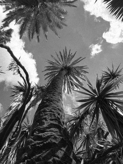 Tree Palm Tree Branch Tree Trunk Sky