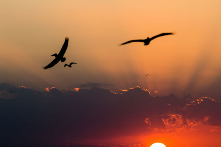 Sunset in Holbox Animal Themes Animal Wildlife Animals In The Wild Beauty In Nature Bird Day Flock Of Birds Flying Mid-air Nature No People Outdoors Silhouette Sky Spread Wings Sunset Wildlife