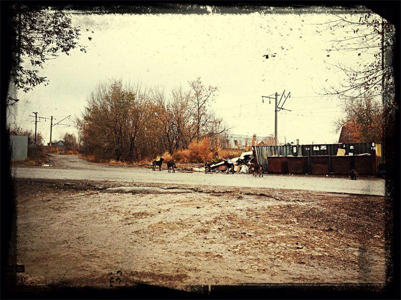 Грустная осень... осеньвгороде собака грязь мусор First Eyeem Photo