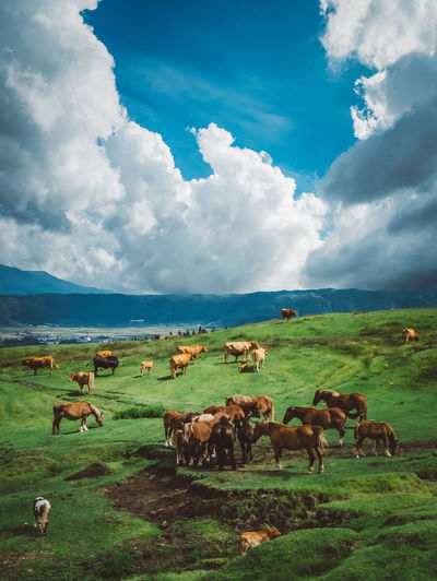 Horses and cows standing on field against sky