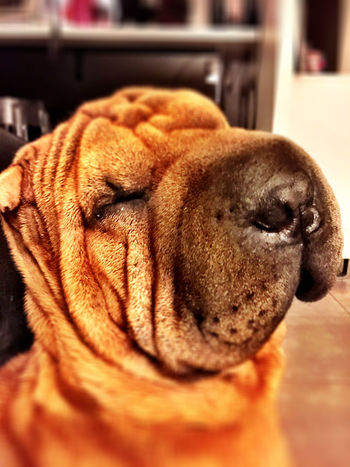My dog winny ? Dog I Love My Dog My Dog Dog Love Dogstagram Sharpei