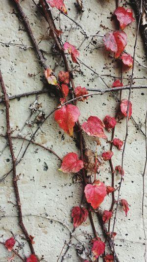 Showcase: February Nature Photography Nature_collection Nature_ Collection  Nature Textures Nature Vine Vines Vinewood Drying leaves.