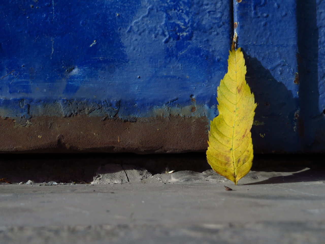 yellow, leaf, day, no people, blue, close-up, autumn, outdoors, textured, built structure, architecture, nature