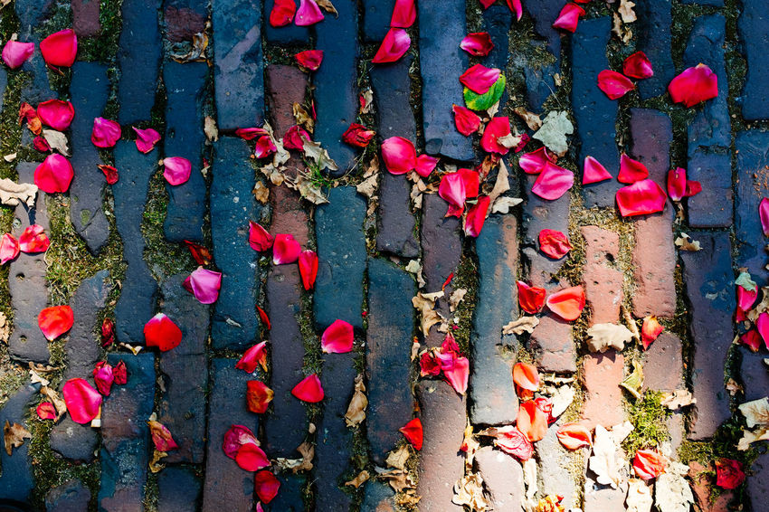 Beauty In Nature Close-up Day Flower Flowering Plant Fragility Freshness Full Frame Growth Leaf Nature No People Outdoors Petal Pink Color Plant Plant Part Red Vulnerability  Wall - Building Feature