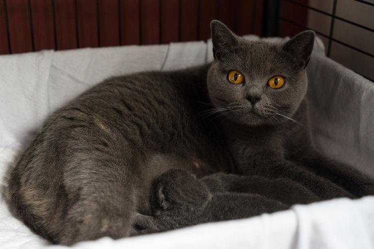 Close-Up Portrait Of Cat Sitting On Sofa