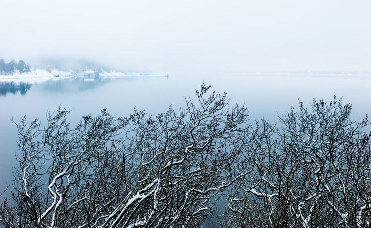 snow-clad twiggies in front of a misty fjord Tree Plant Cold Temperature Tranquility Water Winter Tranquil Scene Beauty In Nature Scenics - Nature No People Snow Nature Fog Non-urban Scene Sky Day Outdoors Blue Wet Nature Sea Waterfront