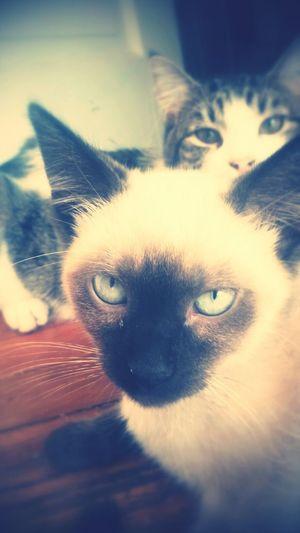 Myprettyboys Kitties Ilovemykitties Sweeties