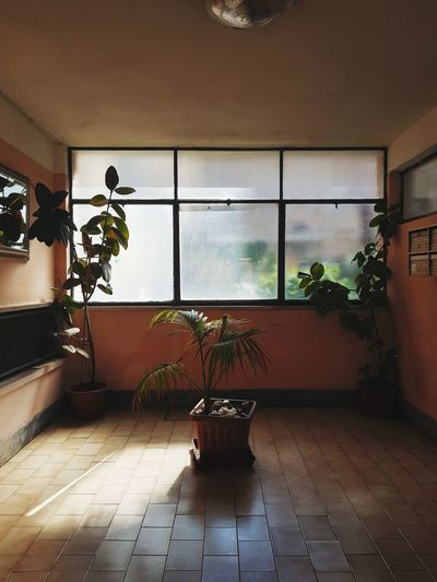 Potted plant on window