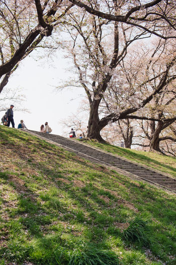 Kyoto, JAPAN - April 3, 2018: People enjoy seeing beautiful blooming cherry blossom at Yawatashi. Plant Tree Real People Group Of People Grass Nature Day Land Lifestyles Beauty In Nature Leisure Activity Growth Women People Adult Men Field Incidental People Outdoors Environment Springtime Hanami Festival Hanami Sakura  Hanami Travel