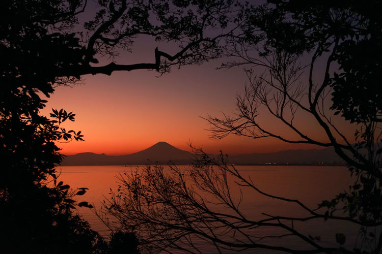 Sunset contrast mt.fuji and tree silhouette