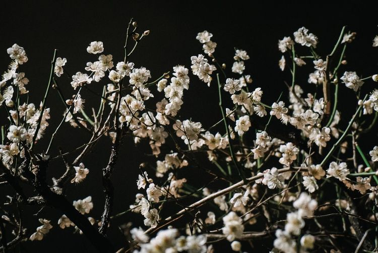 Plant Flowering Plant Growth Fragility Freshness No People Flower Outdoors Winter Snow Vulnerability  Beauty In Nature Tranquility Cold Temperature Sunlight Nature White Color Day Close-up Field
