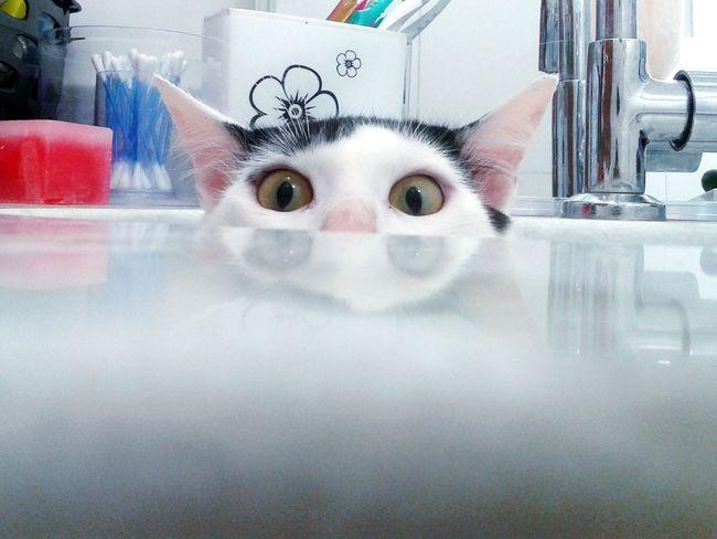 Cat Lovers I Love My Cat ❤ Cat♡ Cats 🐱 Gato😽 😻😻😻❤️