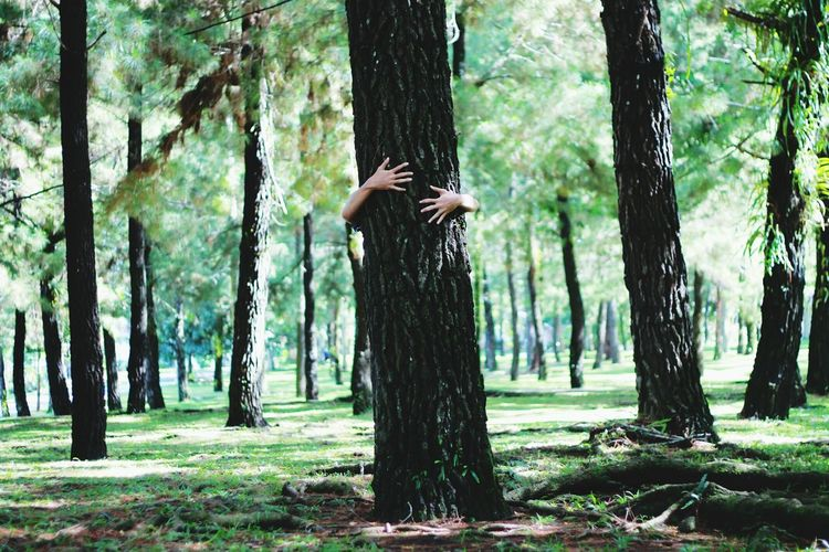 My Hand  In The Forest Hide And Seek Check This Out