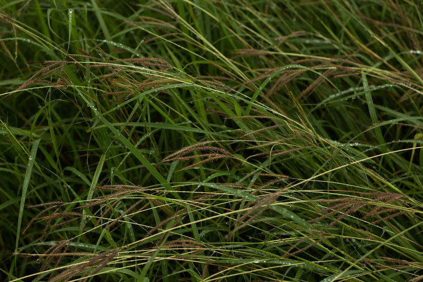 Backgrounds Beauty In Nature Blade Of Grass Close-up Clump Of Grass Focus On Foreground Forest Lawn Full Frame Grass Grass Grassy Green Green Color Growing Growth Nature No People Outdoors Plant Rural Scene Scenics Selective Focus Tranquil Scene Tranquility