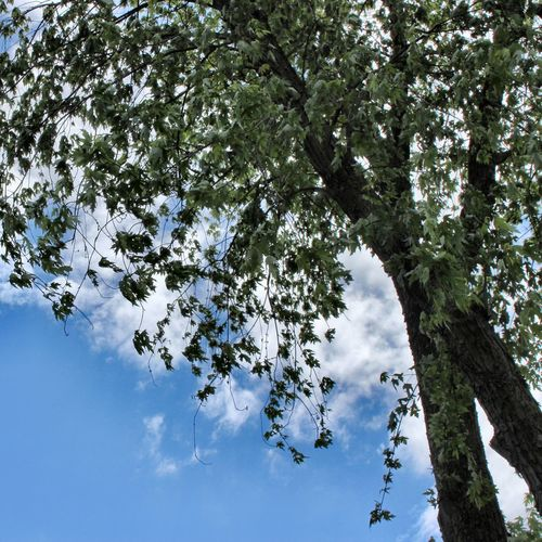 At last the clouds move away 💙 Tree Low Angle View Sky Nature No People Scenics - Nature Cloud - Sky Tranquil Scene Beauty In Nature