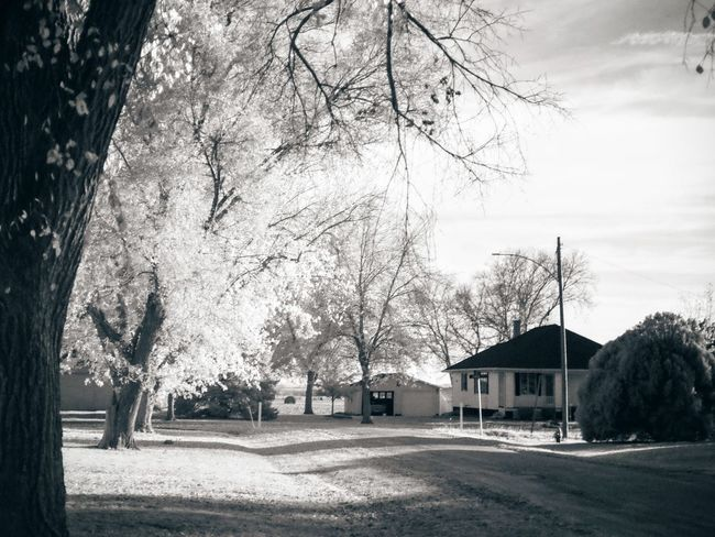 Camera work - Infrared Photography Nebraska October 2016 720nm B&W Collection Camera Work Check This Out Exceptional Photographs Experimental Photography Eye For Photography EyeEm Best Shots EyeEm Best Shots - Black + White EyeEm Best Shots - Landscape Fine Art Photography FUJIFILM X-T1 Fujinon 35mm 1.4 Handheld Infrared Photography Ir Filter Moody My Neighborhood Nebraska Photo Essay Photography Rural America Small Town Taking Photos Visual Journal