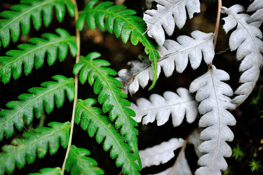 Flora in the ferns, growing dense. Green Growth Natural Natural Beauty Nature Beauty In Nature Close-up Day Expand Fern Ferns Fragility Freshness Green Color Growth Leaf Nature No People Outdoors Plant Plant Kingdom White Winter