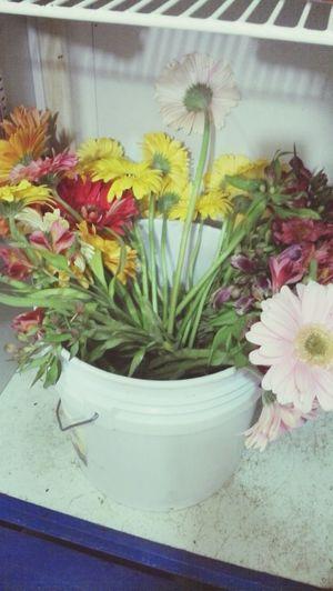 Flowers Hi!