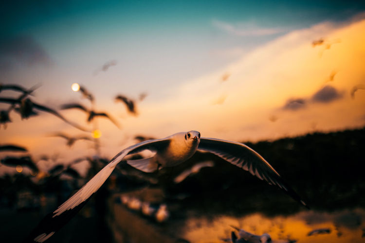 Close-up of bird flying against sky during sunset