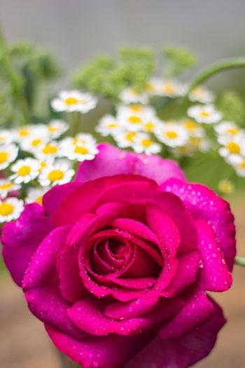 Blumenstrauß Blumen Rot Flowers Rosé Red Pflanzen Millennial Pink