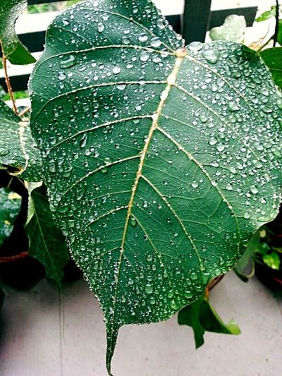 Leaf Drop Close-up Green Color Nature Water Beauty In Nature Freshness Cold Temperature Plant No People Outdoors RainDrop