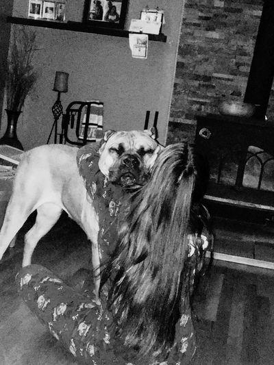 Canecorsolovers Canecorsoitaliano Bestfriend Dog Love Canecorso  ItalianMastiff Dog Pets Long Goodbye EyeEmNewHere Resist