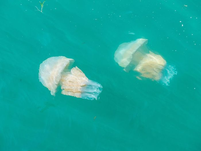 There is a huge Bloom of millions of these Barrel Jellyfish in the waters around the South West of the UK at the moment. Each is well over a metre longNature_collection EyeEm Nature Lover Water_collection Seaside Jellyfish EyeEm Best Shots - Nature News Huge!!