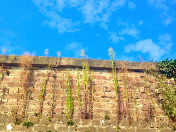 Growing upwards Low Angle View Blue Wall - Building Feature Cloud - Sky Stone Wall No People Vibrant Color Green Color