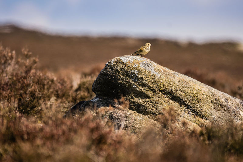 Bird perching on rock at field