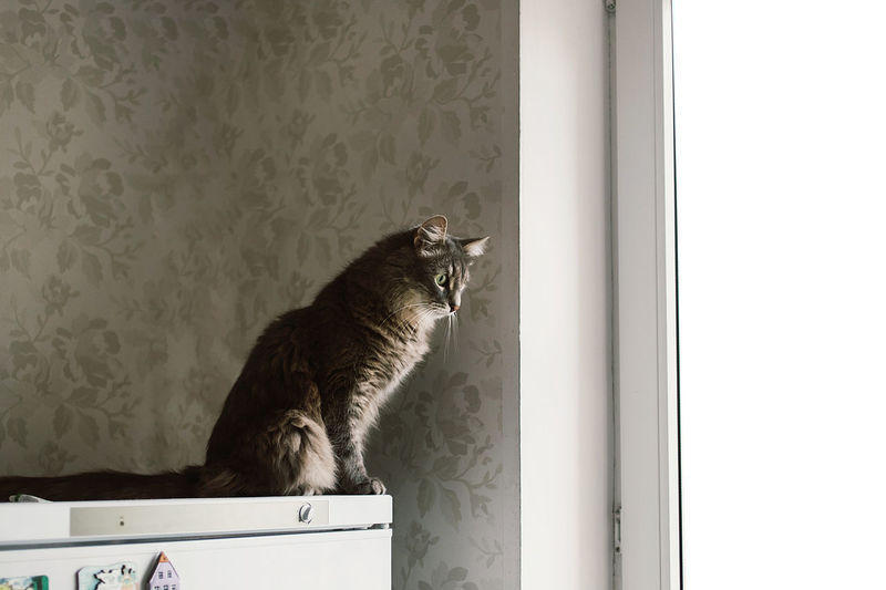 Side view of a cat looking at window