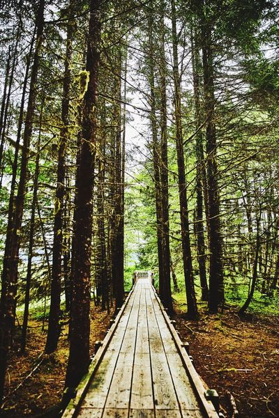Alaska trail Tree Trail Forest WoodLand Nature Beauty In Nature Scenics Outdoors No People Landscape Traveling Nature ClayHaynerPhoto Travel Destinations Alaska Travel Clay Hayner Photo Photooftheday Travel Photography Adventure Explore Travelling Backpack Hikingadventures Trees