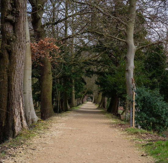Diminishing Perspective Footpath Tranquility Nature No People WoodLand Outdoors