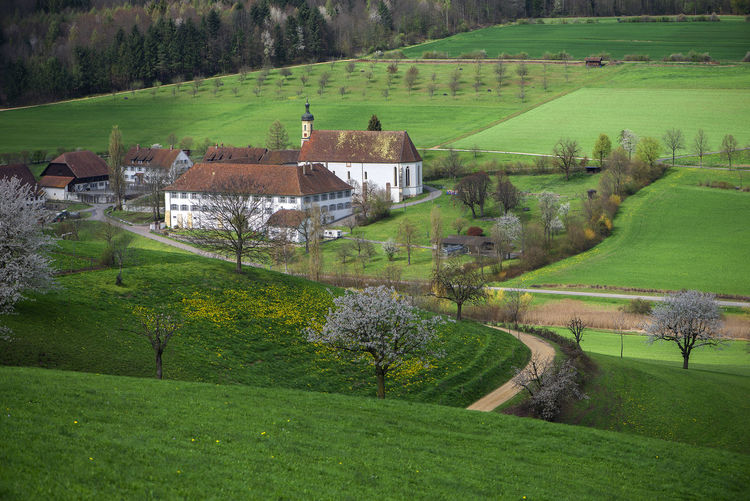 Scenic view of field by trees and houses